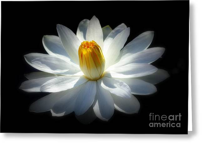 White Water Lily Greeting Card by Lisa L Silva