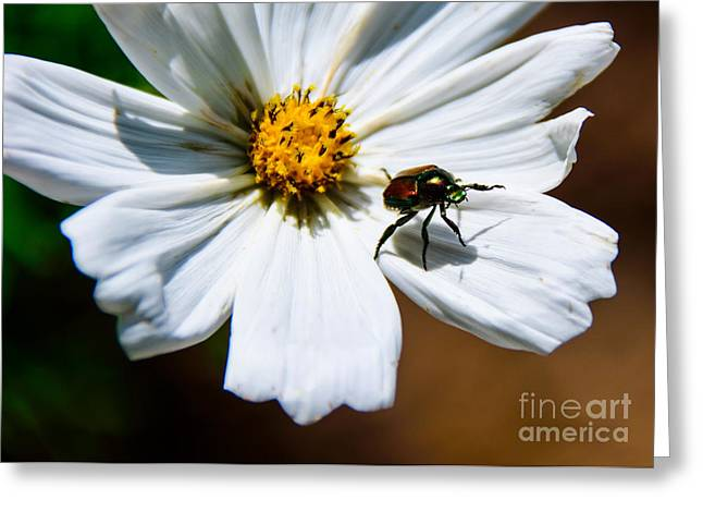 White Wildflower Greeting Card by Lisa L Silva