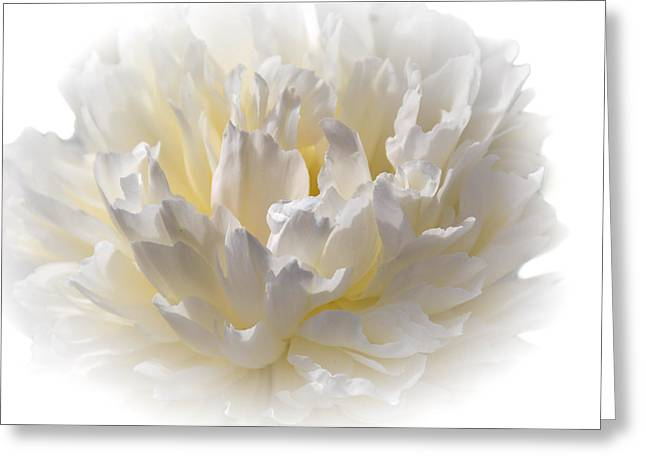 White Peony With A Dash Of Yellow Greeting Card by Sherman Perry
