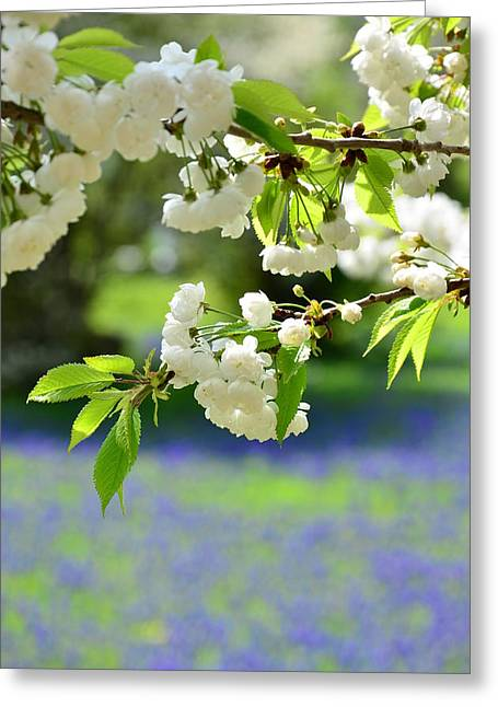 White With Blue Greeting Card by Gynt