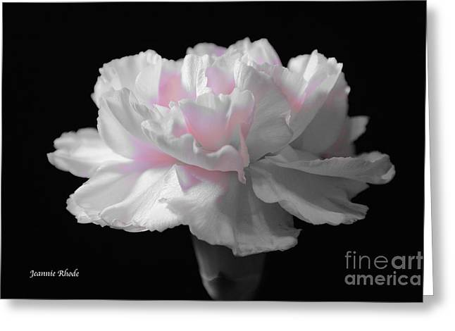 Greeting Card featuring the digital art White With Pink Carnation by Jeannie Rhode