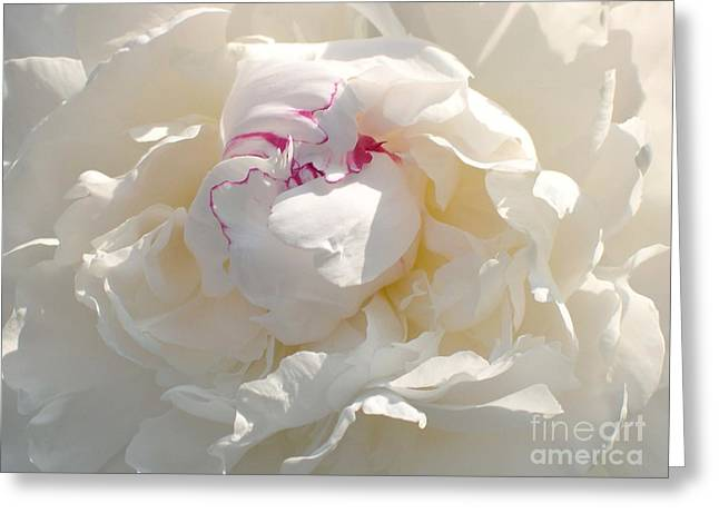White With Red Peony Greeting Card by Addie Hocynec
