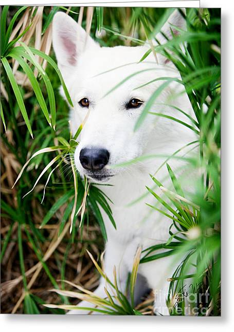 Greeting Card featuring the photograph White Wolf by Erika Weber