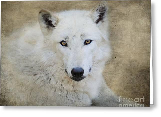 White Wolf Greeting Card by Jai Johnson