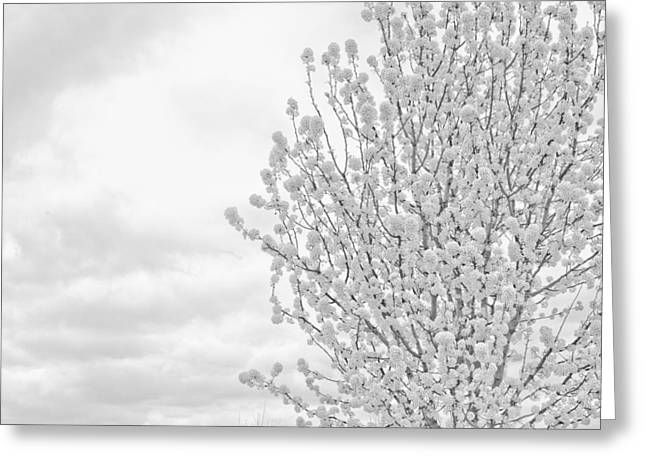White Wood  Greeting Card by DeWaun Lacy