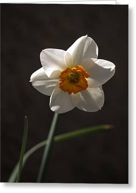 White Yellow Daffodil Greeting Card
