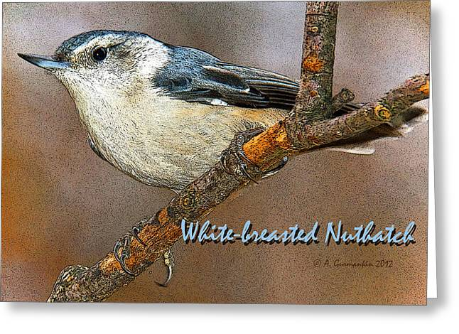 Greeting Card featuring the photograph Whitebreasted Nuthatch by A Gurmankin