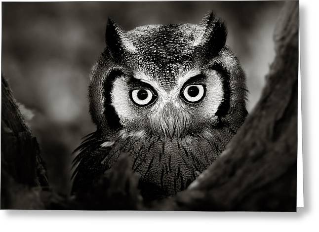 Whitefaced Owl Greeting Card by Johan Swanepoel
