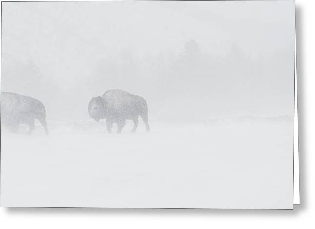 Whiteout Greeting Card by Sandy Sisti