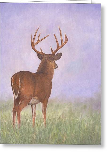 Whitetail Greeting Card by David Stribbling