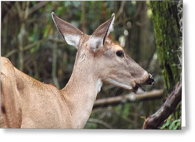 Whitetail Deer 038 Greeting Card