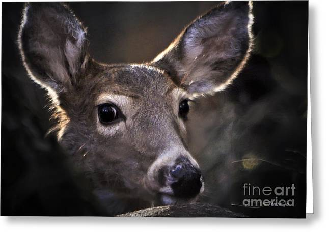 Whitetail Doe Greeting Card by Nava Thompson