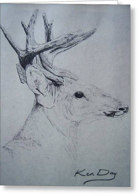 Whitetail Greeting Card by Ken Day