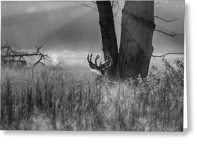 Whitetail Morning Greeting Card