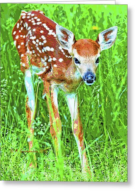 Greeting Card featuring the photograph Whitetailed Deer Fawn Digital Image by A Gurmankin
