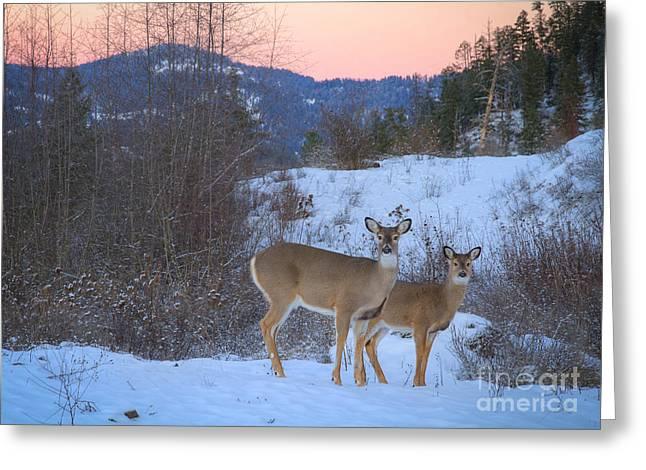 Whitetails At Dusk Greeting Card by Idaho Scenic Images Linda Lantzy
