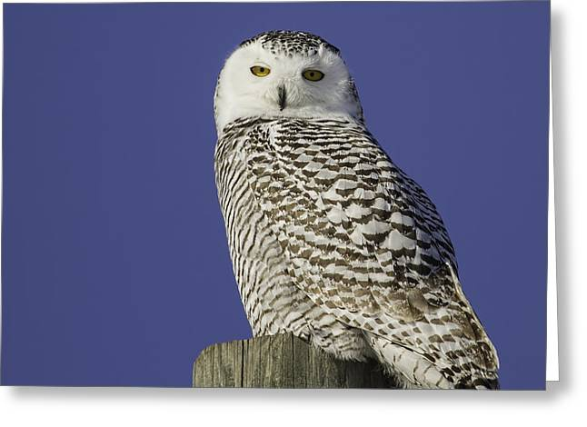 Who Is Looking At Me Greeting Card by Thomas Young