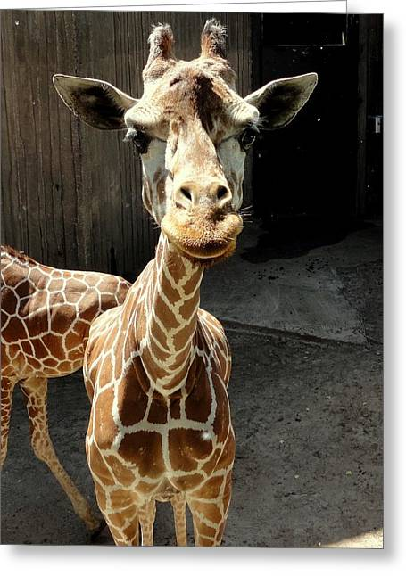 Why The Long Neck? Greeting Card