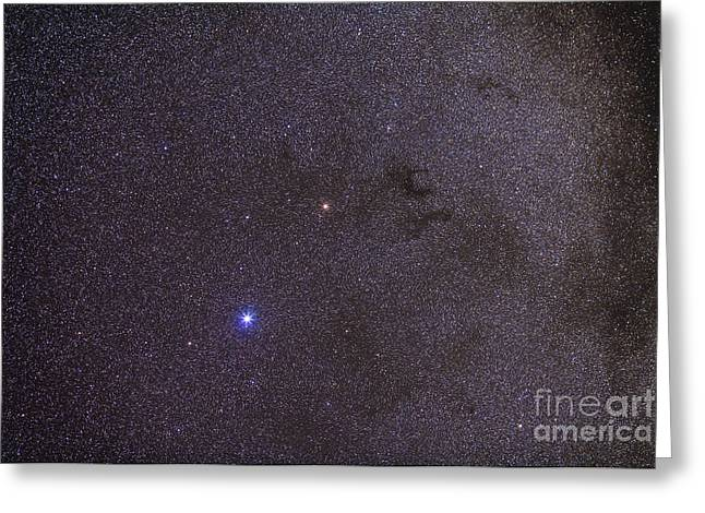 Widefield View Of Dark Nebulae Greeting Card by Alan Dyer
