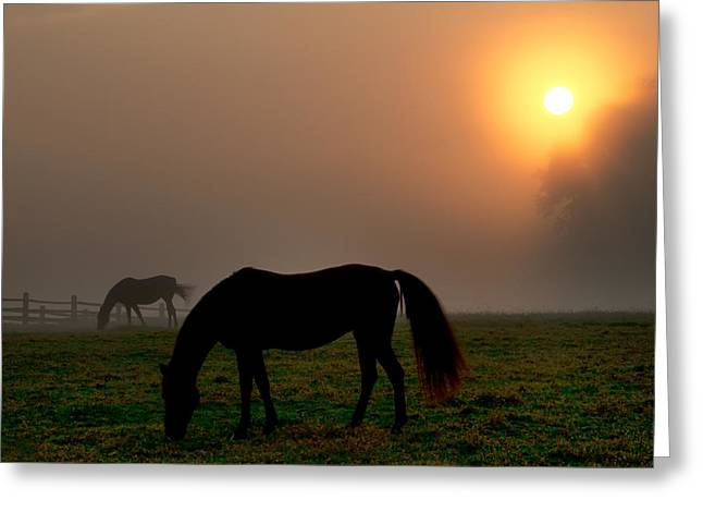 Widener Horse Farm At Sunrise Greeting Card by Bill Cannon