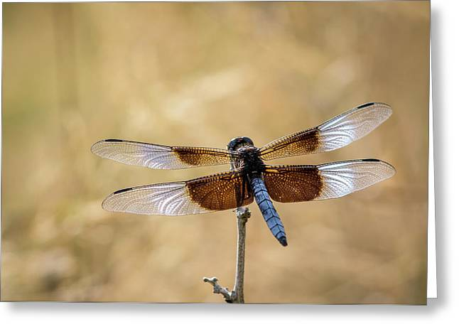 Widow Skimmer Dragonfly Perching Greeting Card by Rob Sheppard