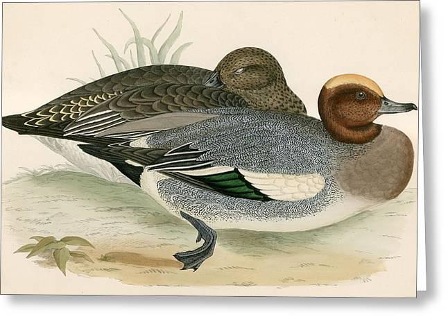 Wigeon Greeting Card by Beverley R Morris