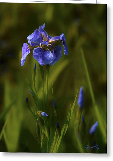 Wild Alaskan Iris Greeting Card by Penny Lisowski