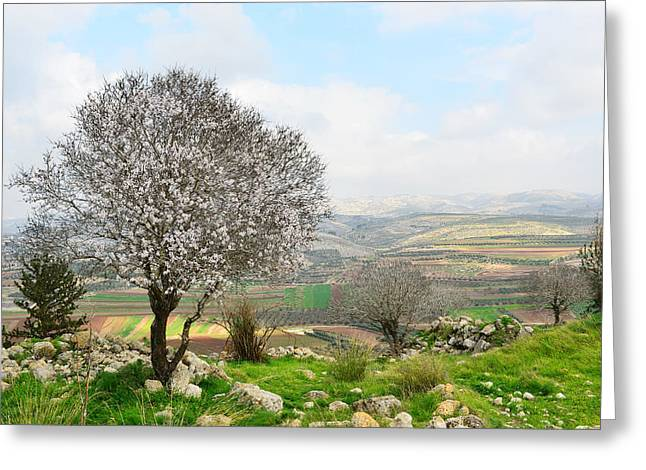 Wild Almond Tree In Beautiful Scenery Greeting Card