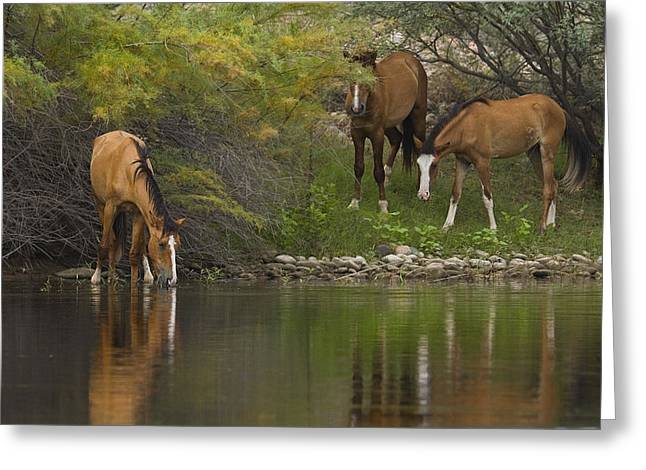 Wild Along The River Greeting Card