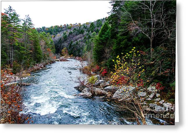 Wild And Scenic Obed River Greeting Card by Paul Mashburn