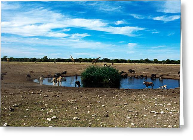 Wild Animals At A Waterhole, Etosha Greeting Card