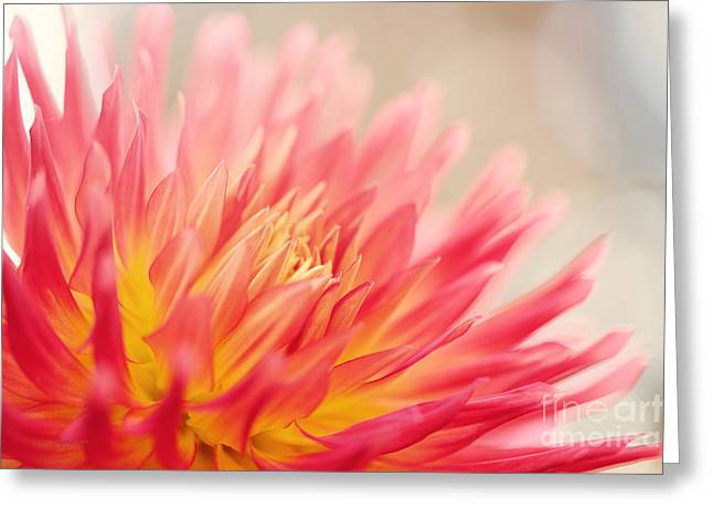 Wild At Heart Greeting Card by Beve Brown-Clark Photography
