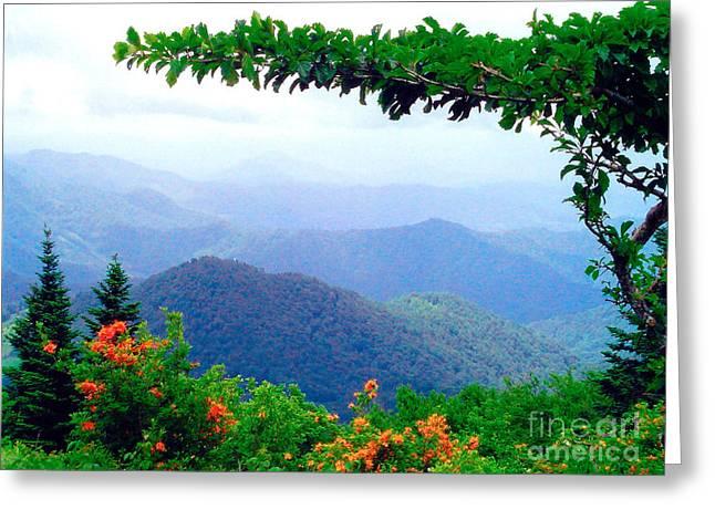 Wild Azalea View Greeting Card by Annlynn Ward
