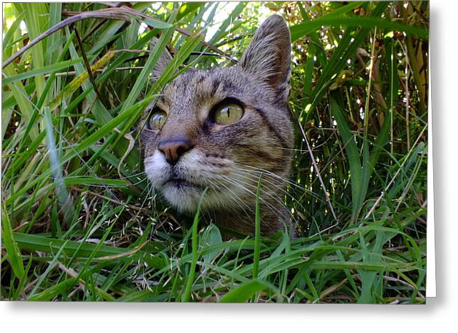 Wild Beast In The Long Grass Greeting Card