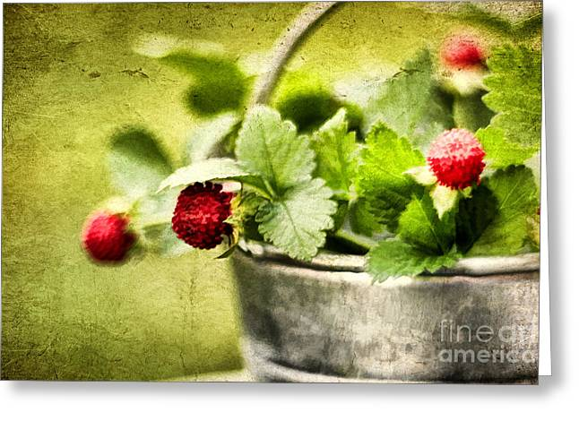 Wild Berries Greeting Card by Darren Fisher