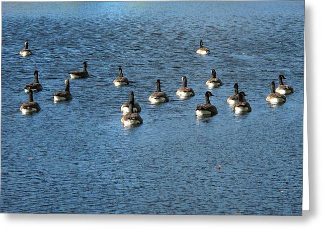 Wild Birds And Pond Greeting Card by Frank Romeo