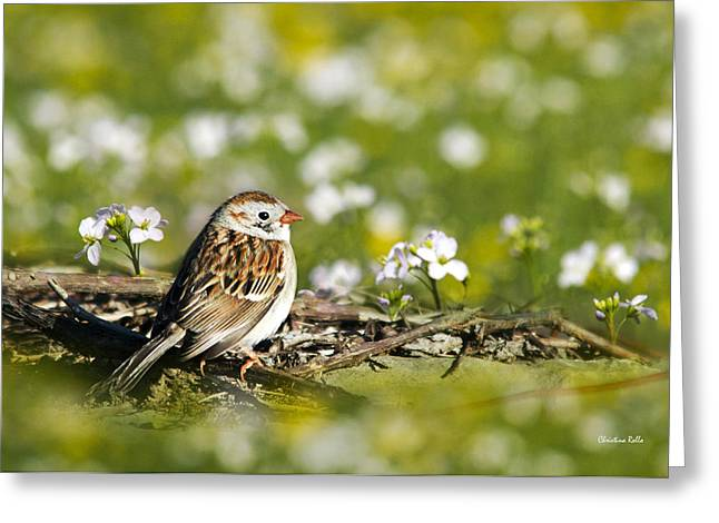 Wild Birds - Field Sparrow Greeting Card by Christina Rollo