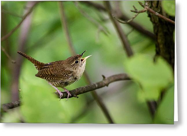 Wild Birds - House Wren Greeting Card by Christina Rollo