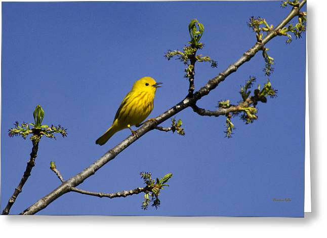 Wild Birds - Yellow Warbler Greeting Card