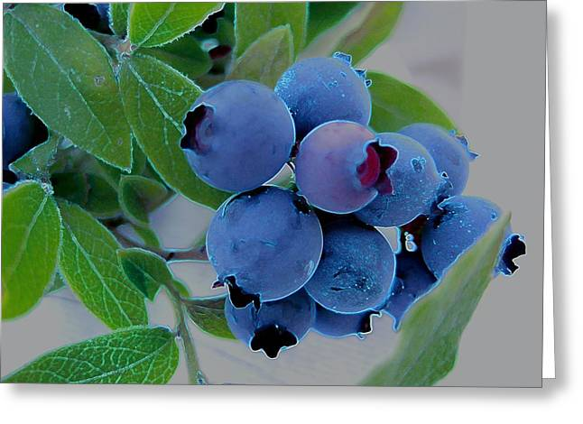 Wild  Blueberries Greeting Card by Shirley Sirois