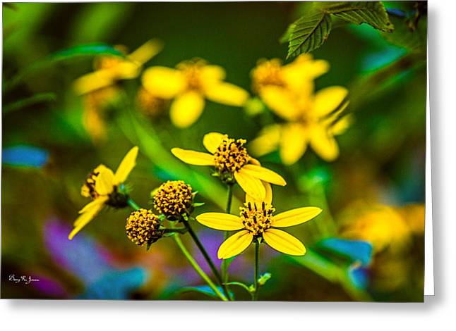 Flowers - Wild Bouquet  Greeting Card by Barry Jones