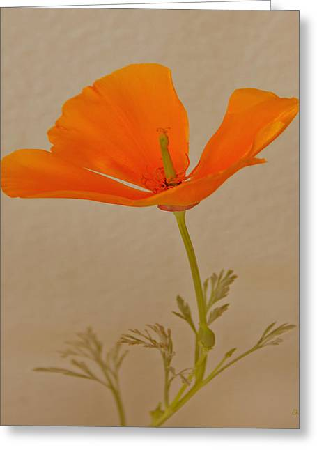 Wild California Poppy No 1 Greeting Card