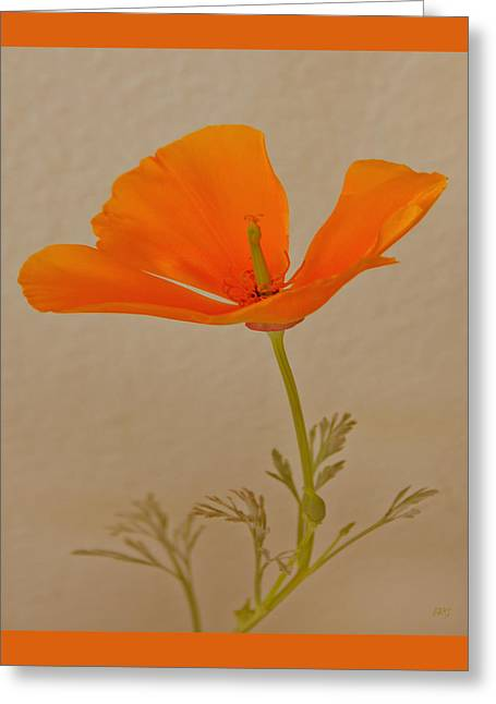 Wild California Poppy No 1 Greeting Card by Ben and Raisa Gertsberg
