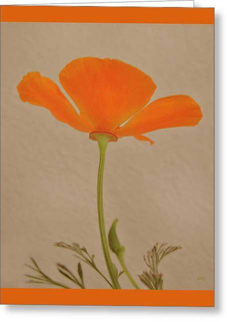 Wild California Poppy No 2 Greeting Card by Ben and Raisa Gertsberg