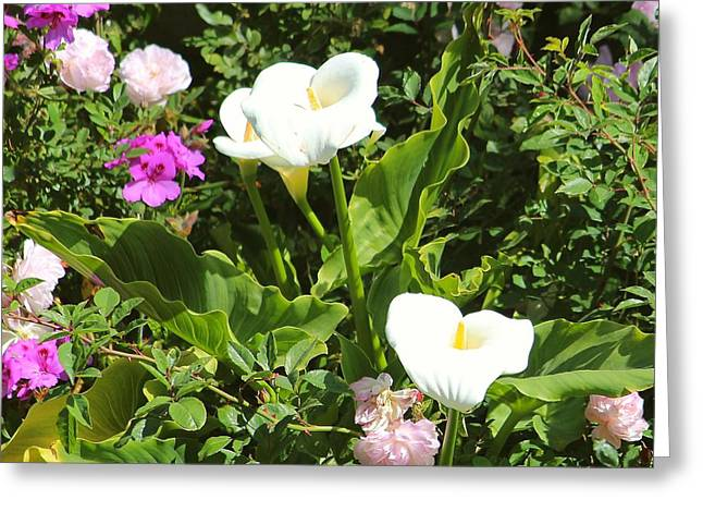 Wild Calla Lillies Greeting Card
