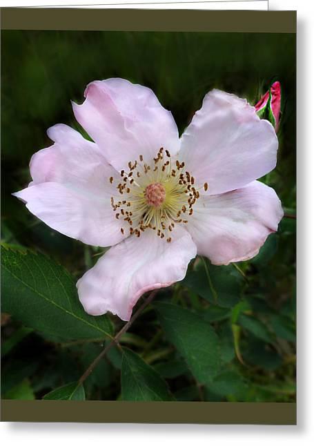 Wild Carolina Rose Greeting Card