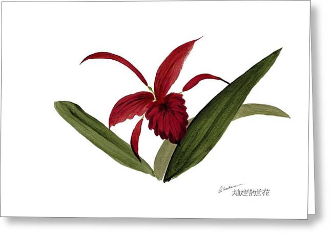 Wild Chinese Orchid #3 Greeting Card by Alethea McKee