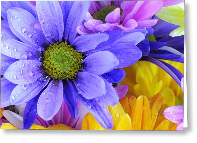 Wild Crazy Daisies 2 Greeting Card by Kenny Francis