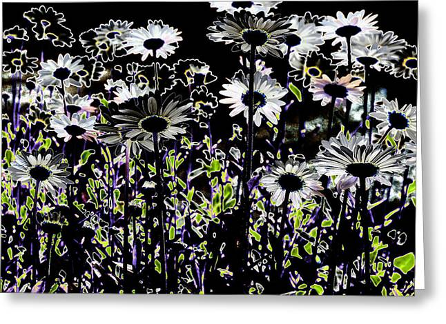 Wild Daisies IIi Greeting Card by David Patterson