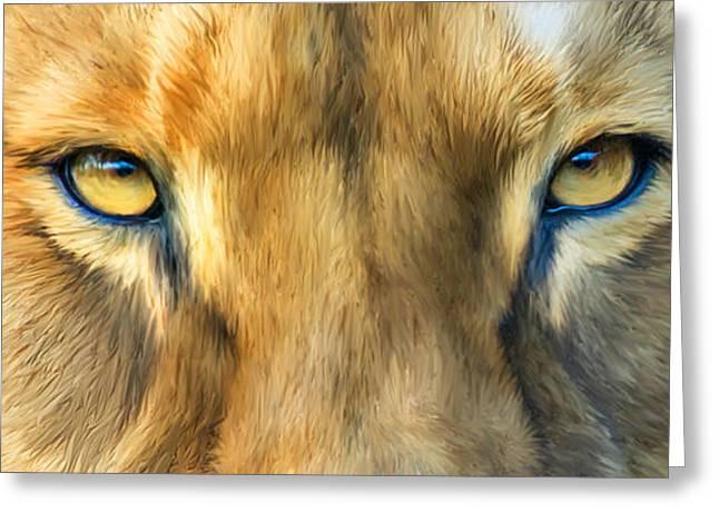 Wild Eyes - Lioness Greeting Card by Carol Cavalaris